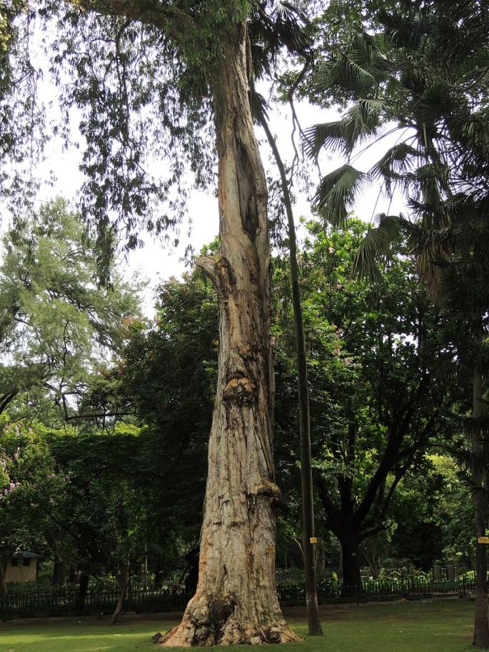 Ranibaug Sep 2017 (2)
