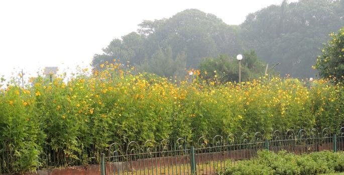 Hanging Gardens (6)
