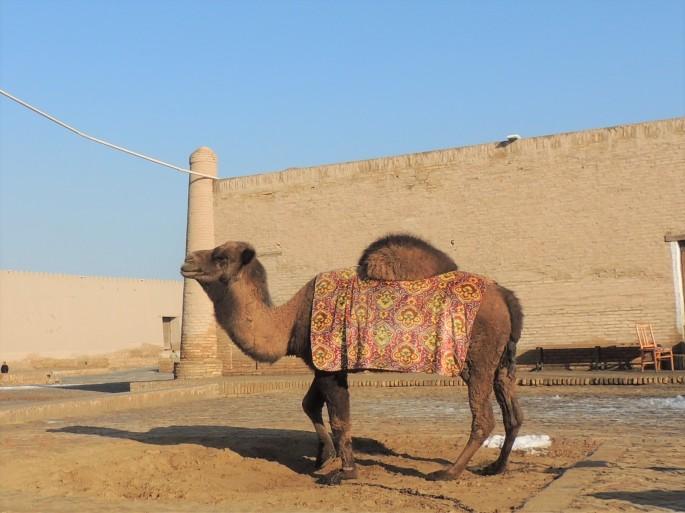 Khiva (21)