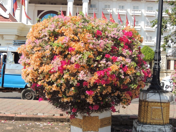 Lao Flowers (5)